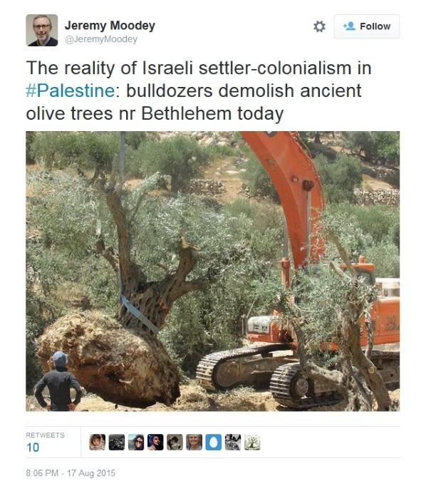 Olive tree tweet